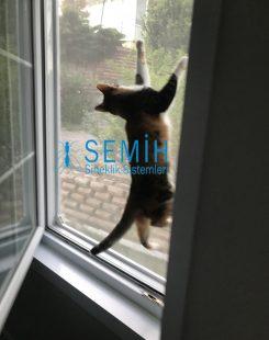 Kedi Sineklik (1)