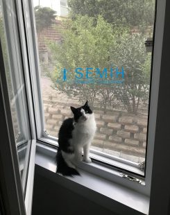 Kedi Sineklik (12)