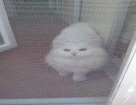 kedisinekliği
